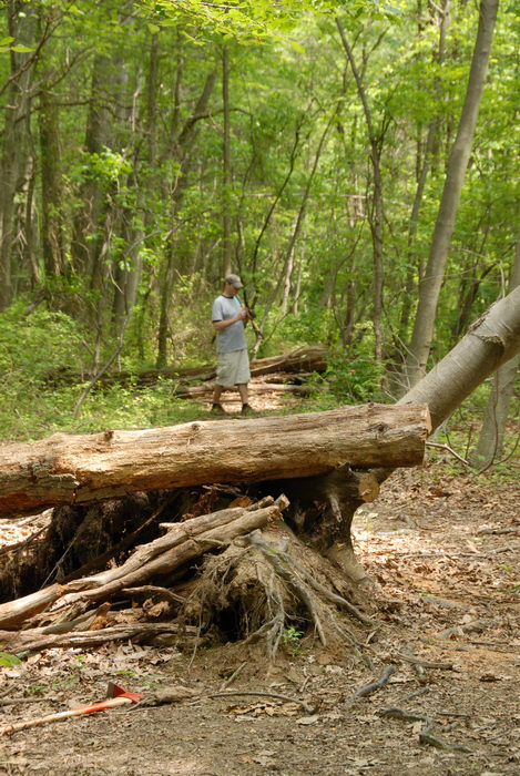 S.M.A.R.T., SMART, ground cover, log pile, path, roots, trail, trail maintenance, trees, woods