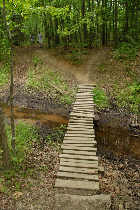 bridge, ground cover, mud, path, stream, trail, trees, water, wooden bridge, woods
