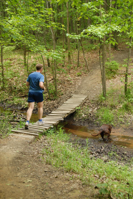 bridge, dog, grass, ground cover, jogger, jogging, movement, path, stream, trail, trees, water, wooden bridge, woods