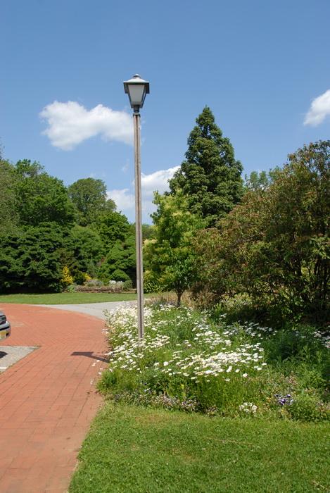 blue sky, bushes, flowers, garden, light post, path, trees, walkway