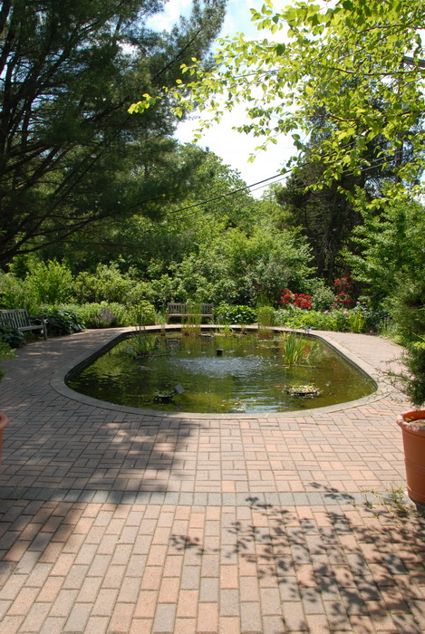 bushes, ground cover, koi poond, pavers, garden
