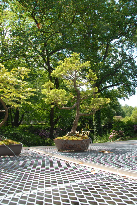 bushes, ground cover, leaves, trees, bonsai