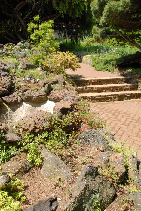 bushes, ground cover, leaves, path, stairs, steps, trees, walkway, rocks