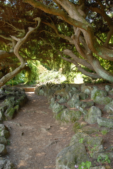 bushes, ground cover, leaves, path, trees, walkway, rocks