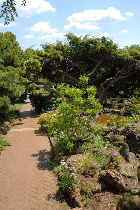 bushes, ground cover, leaves, path, rocks, trees, walkway, garden