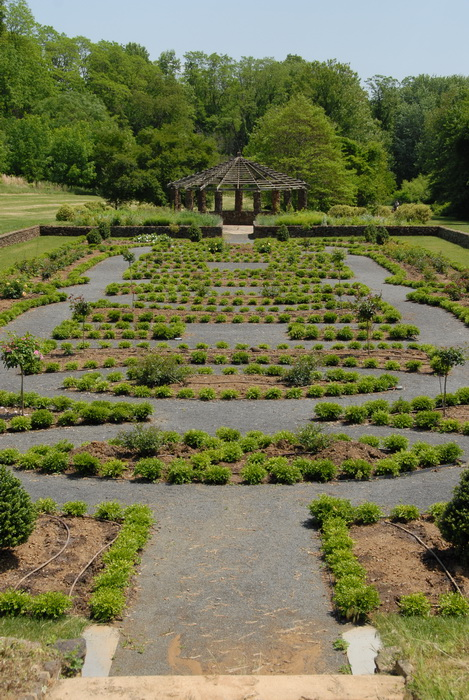 bushes, ground cover, leaves, path, trees, walkway, garden