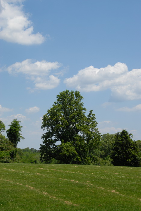 leaves, trees, blue sky