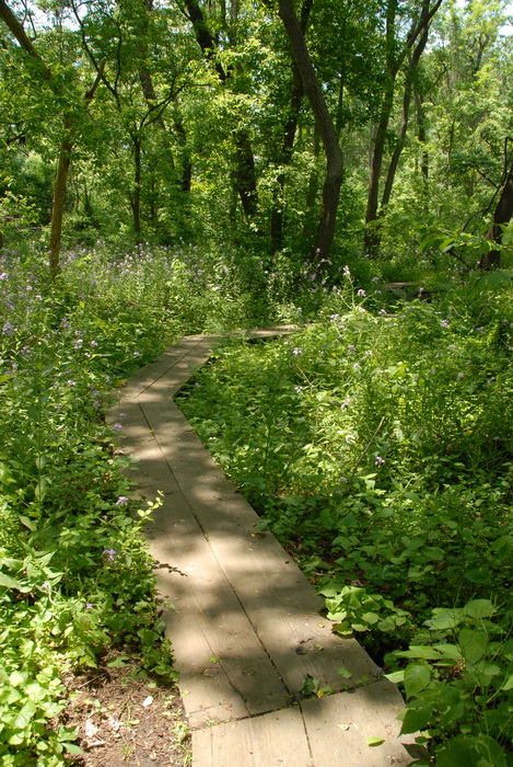 leaves, path, trail, trees, walkway, bushes, ground cover