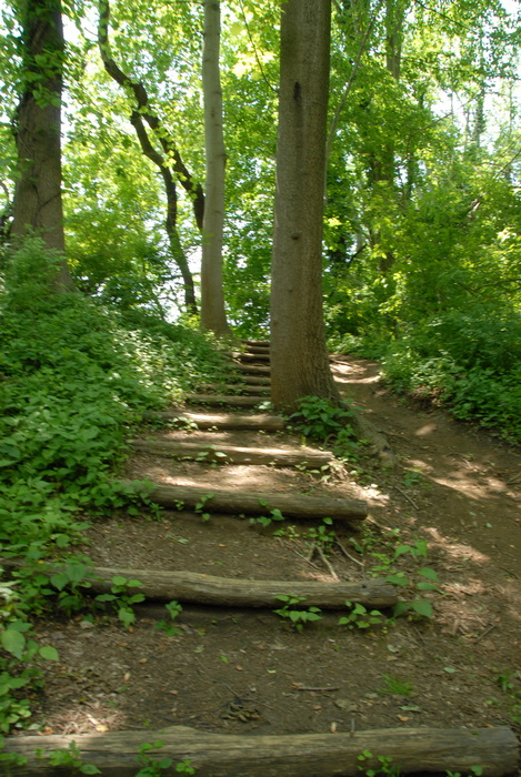 leaves, stairs, steps, trees, bushes, ground cover