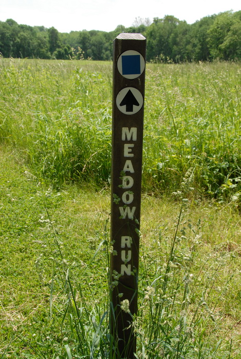 bushes, feild, ground cover, trail marker, grass