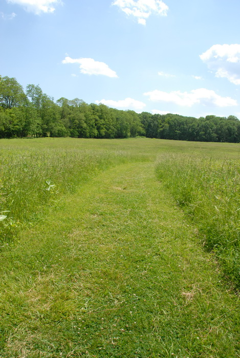 bushes, feild, ground cover, leaves, path, trail, trees, walkway, grass