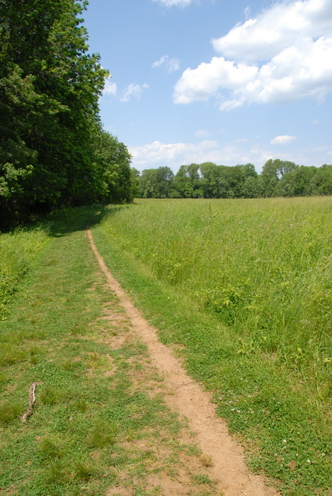 blue sky, bushes, feild, ground cover, leaves, path, trail, trees, walkway, grass
