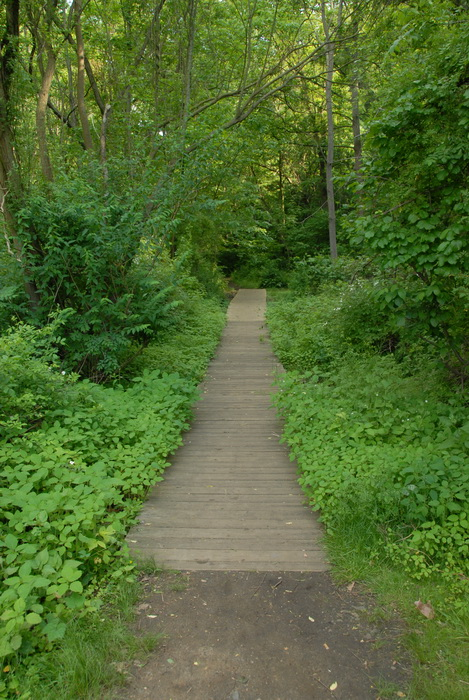 boardwalk, bushes, ground cover, leaves, path, trail, trees, walkway, grass