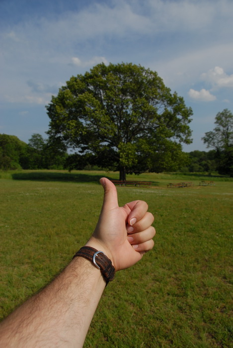Thumbs across America, blue sky, leaves, trees, grass