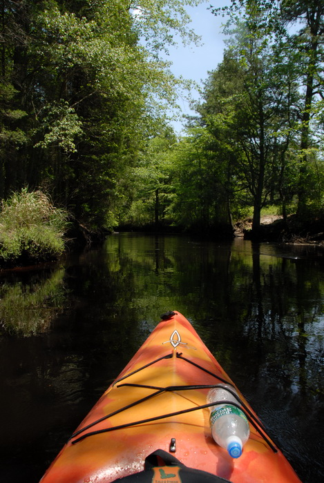 kayak, kayaking, paddling, river, water, trees