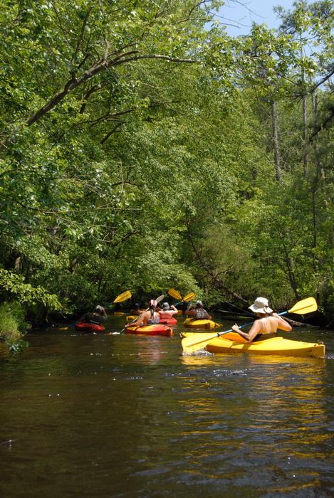 kayak, kayaking, paddling, river, water, trees