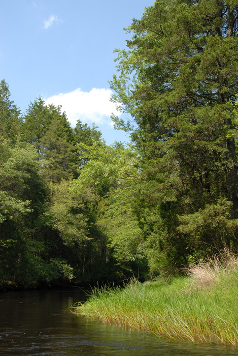 blue sky, river, trees, water, grass