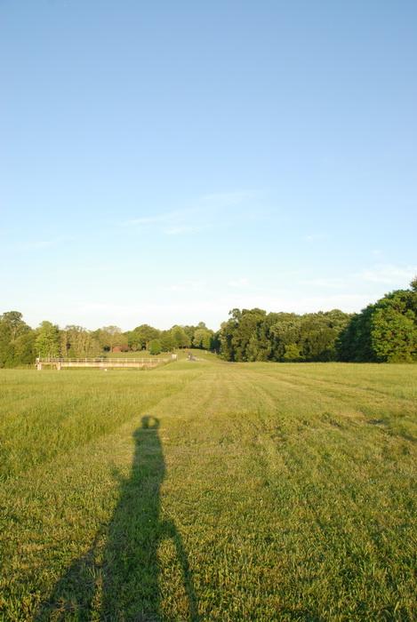 field, grass, trees, shadow