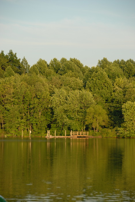 lake, pond, trees, water