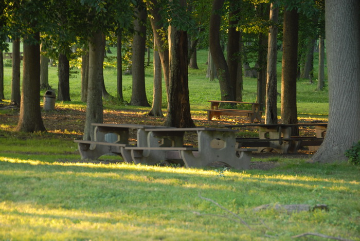 grass, trees, wood, picnic area, picnic table