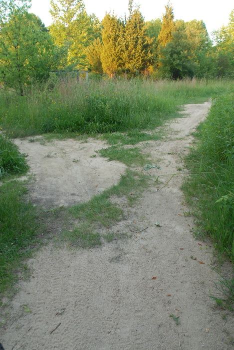 path, trail, trees, grass