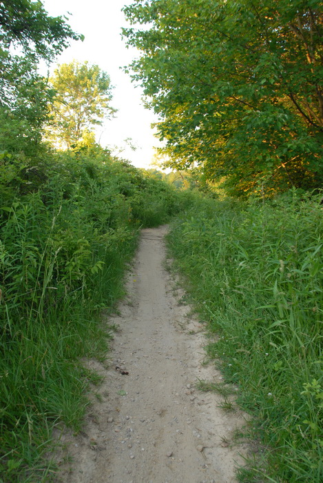 path, trail, trees, woods, grass