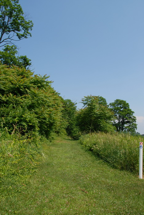 blue sky, trees, ground cover, grass, trail marker, trail