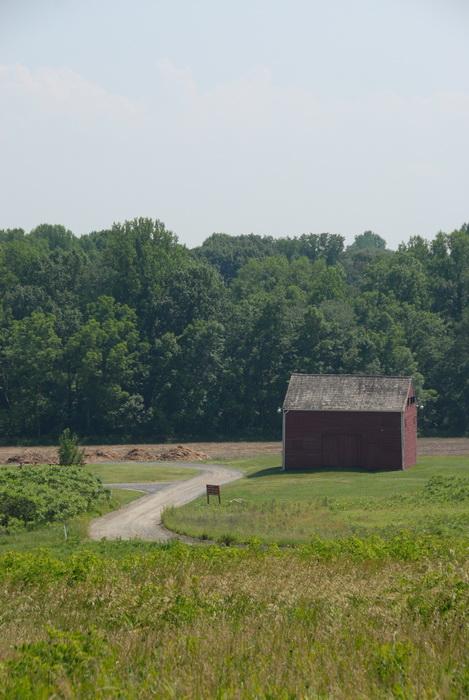 trees, woods, barn, road, dirt road, grass, field, meadow
