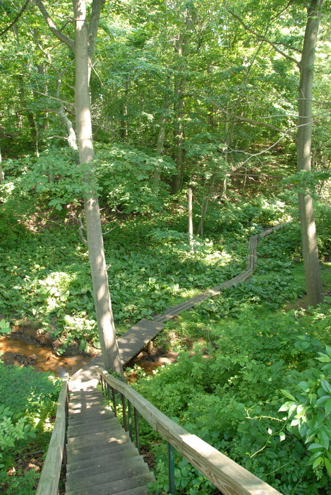woods, trees, ground cover, trail, boardwalk, strairs, stream, marsh