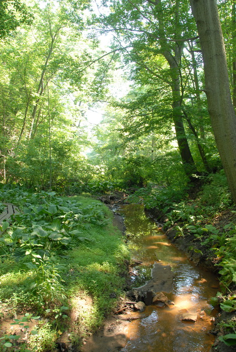 grass, ground cover, stream, trees, water, woods