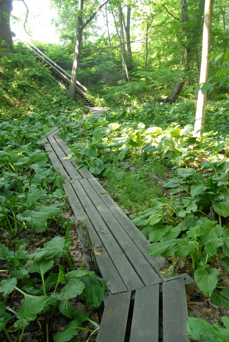 boardwalk, ferns, ground cover, marsh, stairs, stream, trail, trees, woods
