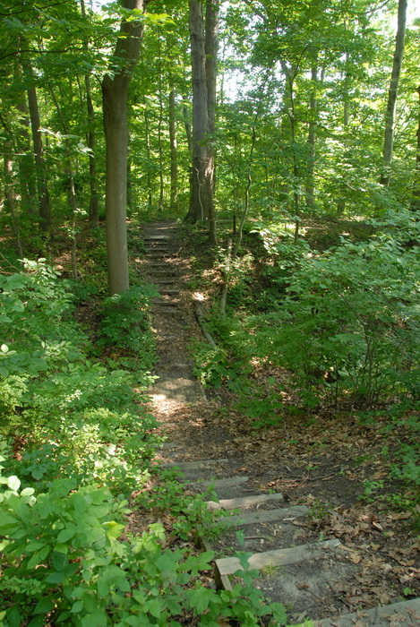 trail, path, woods, trees, ground cover, stairs