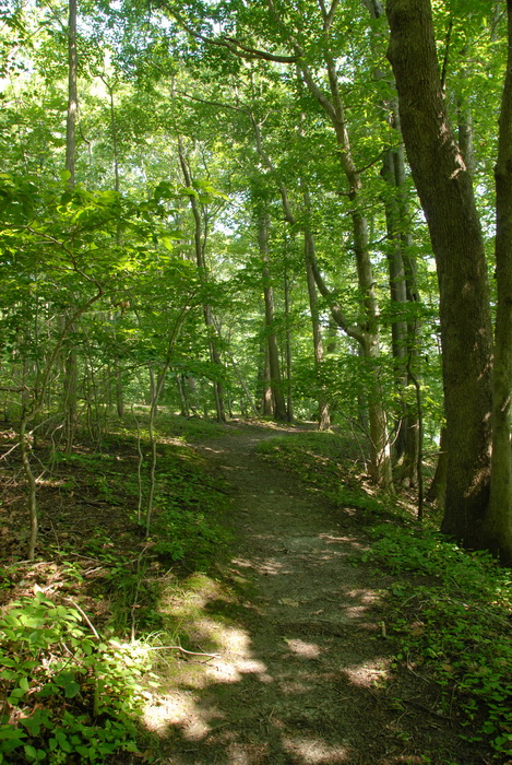 trail, path, woods, trees, ground cover