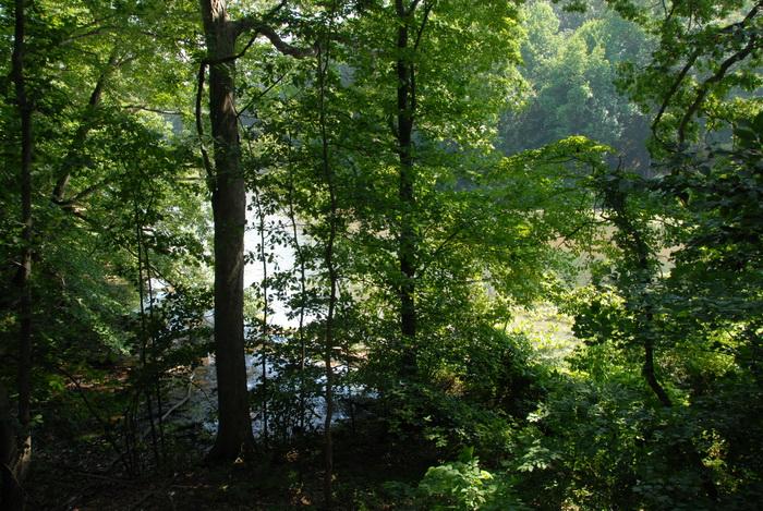 trees, woods, lake