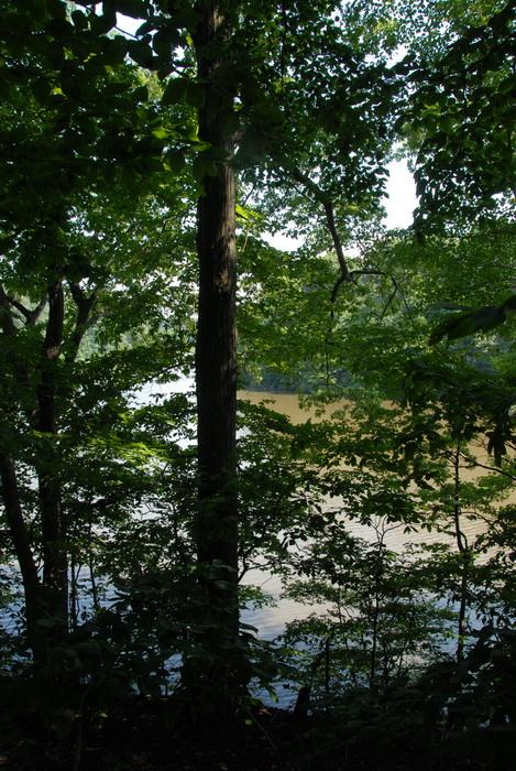 lake, pond, trees