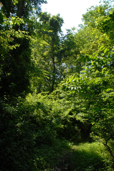 woods, trees, thick woods