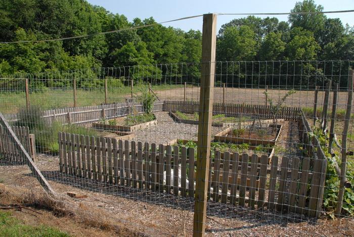 trees, fence, garden