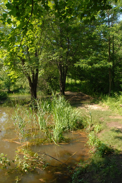 marsh, pond, swamp, trees, water, path, trail
