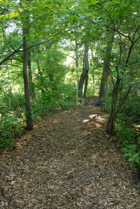 woods, trees, trail, wood chip path, ground cover