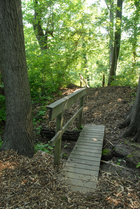 ground cover, trail, trees, wood chip path, woods, bridge, handrail
