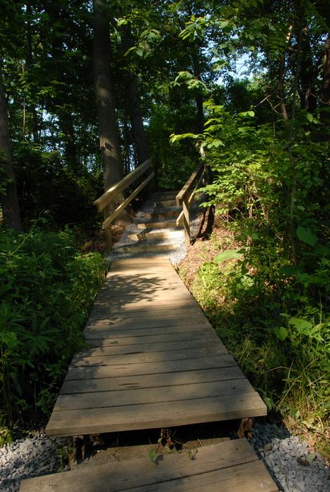 railing, stairs, steps, trees, woods, boardwalk