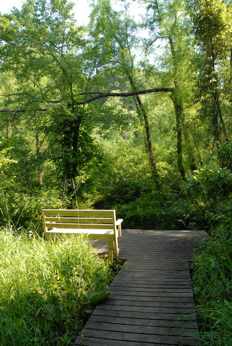 trees, boardwalk, bench, woods, grass