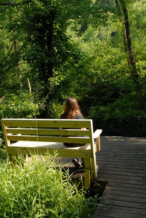 Jackie, bench, boardwalk, grass, trees, woods