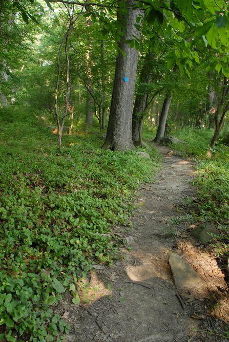 dirt path, path, rocks, trail, trail marker, trees, woods
