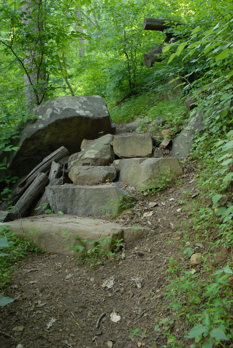 ground cover, rock steps, rocks, trail, trees, woods
