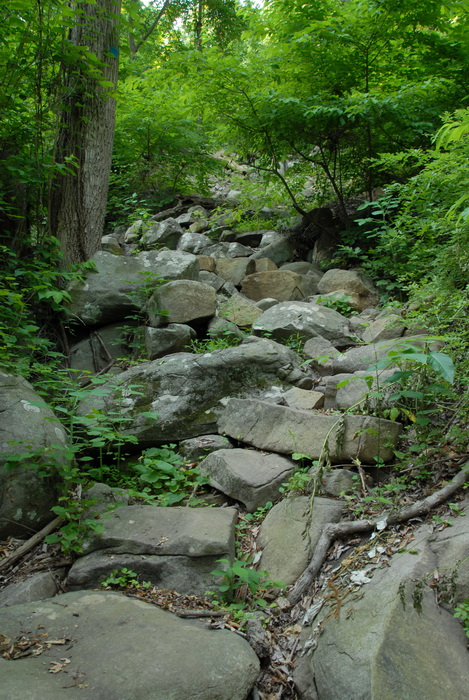 ground cover, rock steps, trail, trees, woods, rocks