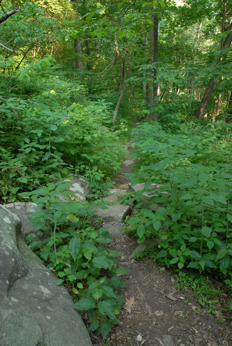 ground cover, rocks, trail, trees, woods