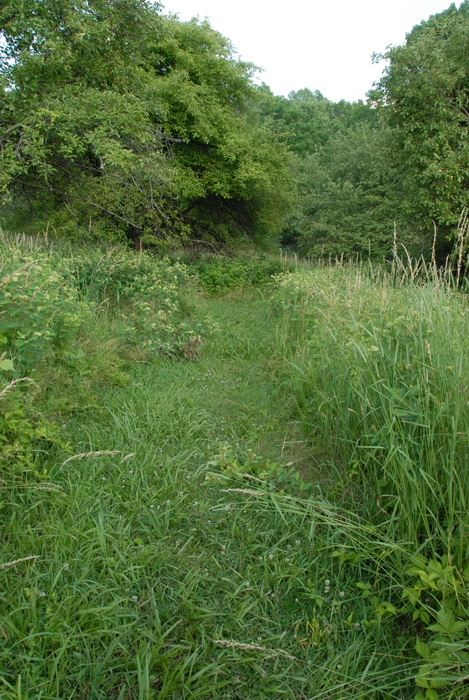 overgrown trail, grass, ground cover, trees