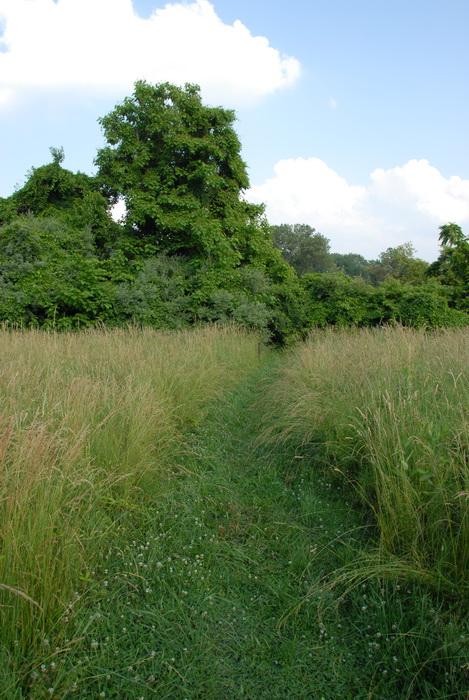 blue sky, trees, grass, field, grass path, grass trail, trail, clouds