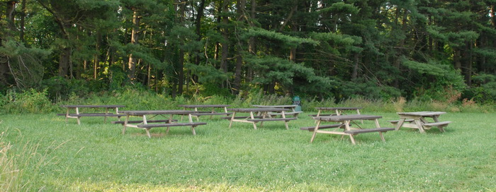 trees, grass, picnic area, picnic tables